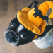 Thumbnail for Halloween Safety and Your Pet